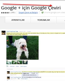 Google + çeviri